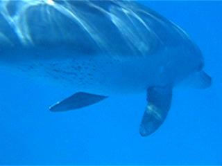 Delphin2_0001